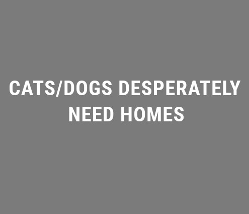 CATS/DOGS DESPERATELY NEED HOMES